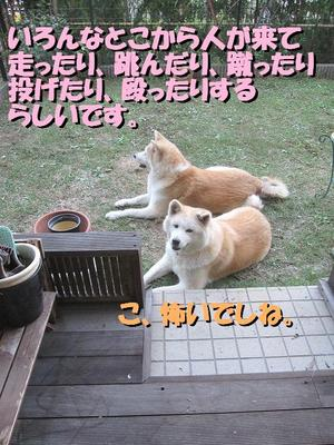 IMG_2927-2.jpg