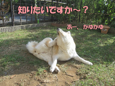 知りたいですか〜?