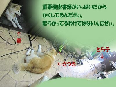 IMG_9673.jpg